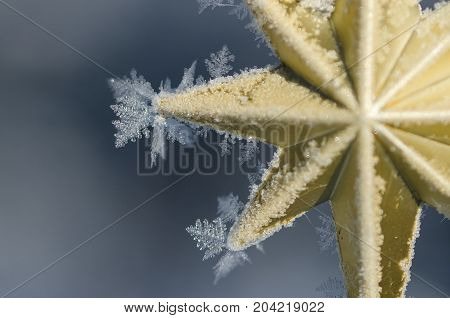 Golden Frost Covered Christmas Star Decorating an Outdoor Tree