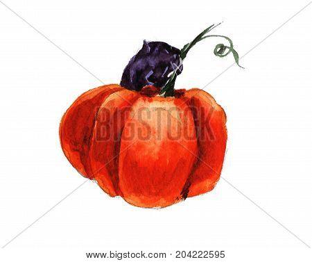 Halloween black cat eating pumpkin holliday autumn