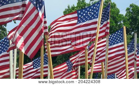 Many American flags wavering in the wind