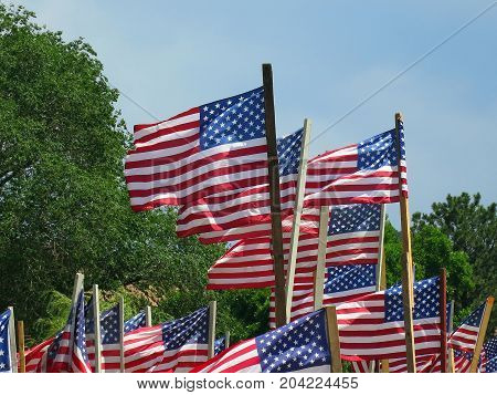 Multiple blowing, American Flags on a summer day