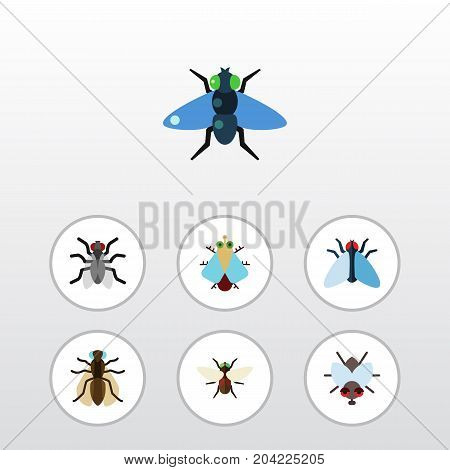 Flat Icon Buzz Set Of Housefly, Buzz, Mosquito And Other Vector Objects