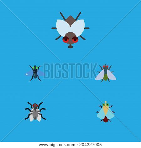 Flat Icon Buzz Set Of Tiny, Buzz, Gnat And Other Vector Objects