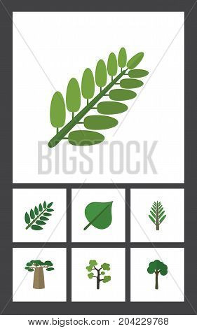 Flat Icon Nature Set Of Leaves, Baobab, Jungle And Other Vector Objects