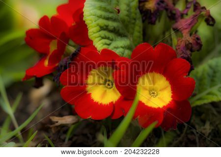 Close up of gorgeous red and yellow flowers