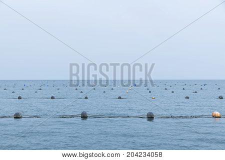 Sea Farm Mussel Buoys Gulls Seafood Water