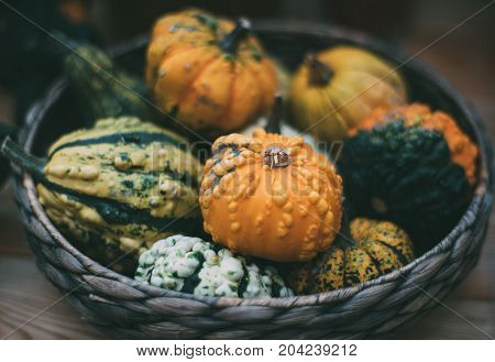 Wicker wooden basket full of recently harvested decorative pumpkins of different varieties shallow depth of field