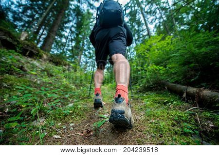 Traveler in hiking boots with trekking poles and a backpack walks in the forest