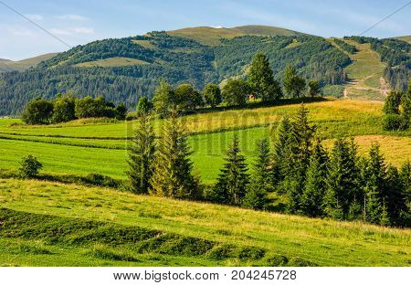 Beautiful Countryside With Trees On Hillside