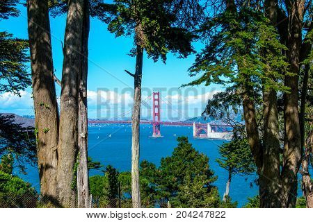View of the Golden Gate Bridge through trees in Lands End Park, Golden Gate National Recreation Area.