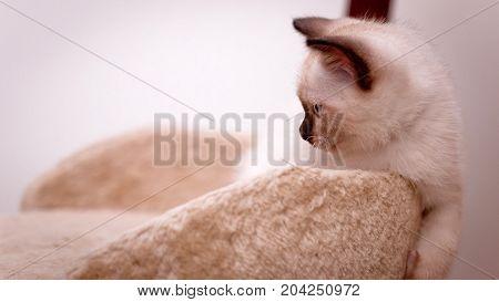In a cat climbing frame foolish kitten