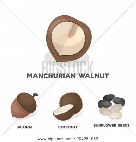 Coconut, acorn, sunflower seeds, manchueian walnut.Different kinds of nuts set collection icons in cartoon style vector symbol stock illustration .