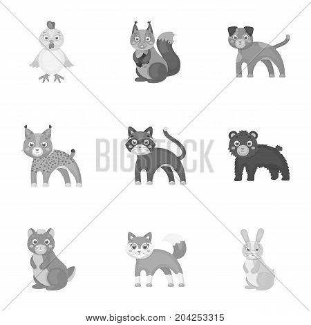 Farm, zoo, ecology and other  icon in monochrome style.Australia, nature, toys, Australia, nature, toys,