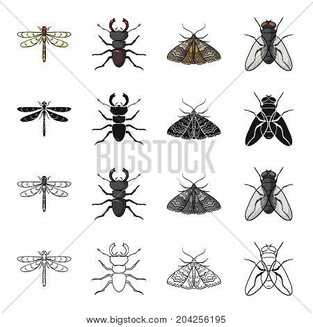 Insect dragonfly, beetle, butterfly, fly. Insect set collection icons in cartoon black monochrome outline style vector symbol stock illustration .