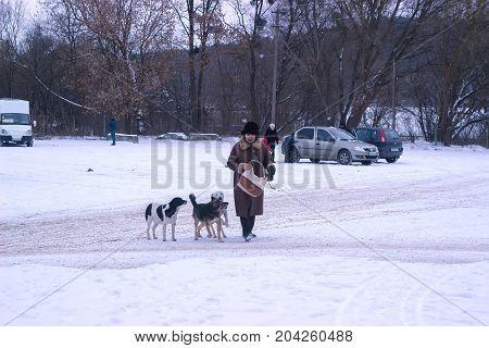 Zhytomyr, Ukraine - MARCH 05, 2014: old woman at winter street feeding stray dogs