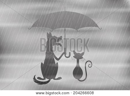 Dog and cat under the umbrella in rainy weather.