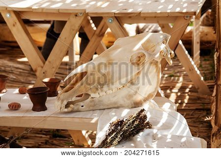 Big White Animal Skull On A Wooden Table In Warm Sunlight