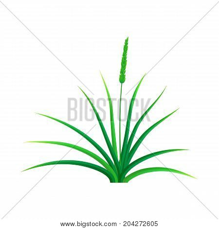 Field grass icon. Realistic illustration of field grass vector icon for web design isolated on white background
