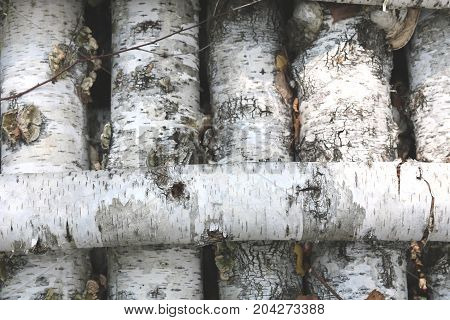Texture of birch bark on birch logs as natural wooden background