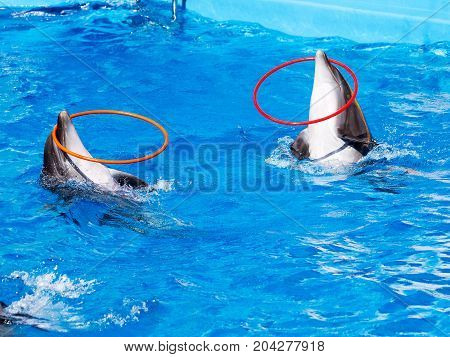 Glad Beautiful Dolphin In Blue Water In The Swimming Pool On A Bright Sunny Day Sailing On The Foam