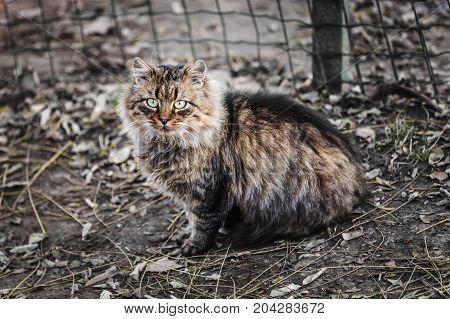 Beautiful Street Cat