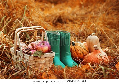Wicker basket with apples composed with pumpkins and gumboots in straw with burning lantern near.