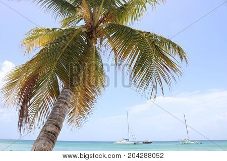 welcome to the Saona Island (Dominican Republic)