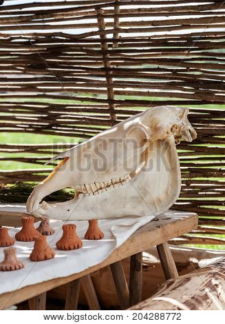 Big White Horse Skull On A Wooden Table With Wicker Wall In The Background
