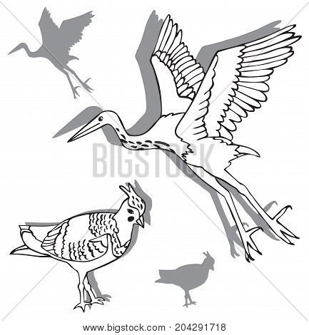 illustration on white background two birds Heron and lapwing silhouettes