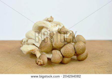 raw buna shimeji Japanese mushroom on wooden chop block in white background