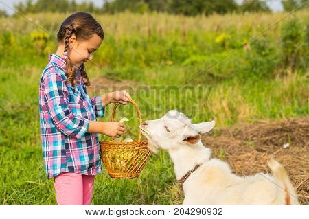 Beautiful Little Child Of Russian Girl Feed Goat Fresh Cabbage In Rural. Care Goat.