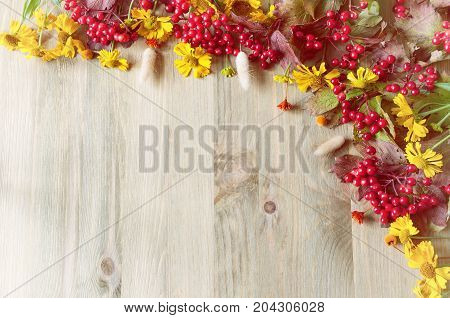 Fall background with seasonal fall nature berries and fall plants on the wooden background. Fall concept. Free space for text. Fall season background. Fall still life