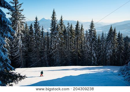 Skier Riding On Fresh Snow In The Carpathian Mountains, Ukraine. Beautiful Landscape Of Mighty Fores
