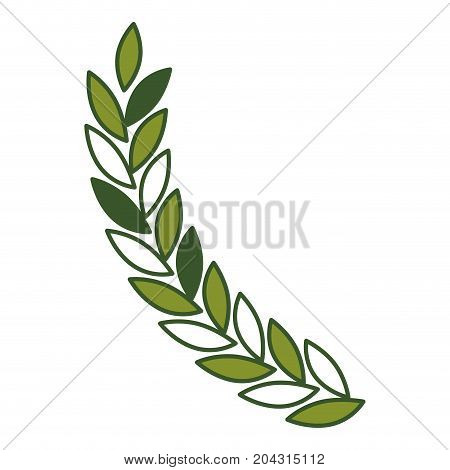 olive branch closeup in green color vector illustration
