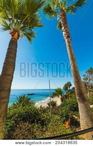 Palm trees in Laguna beach. California USA