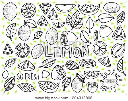 lemon illustration vecto background with lemon and lemon slice