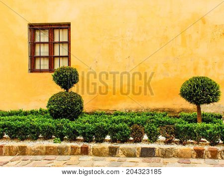 Vintage wooden greed window with lattice on the old yellow painted wall with decorative trimmed tree and bush. Stained plaster. Courtyard of Armenian church in Lviv Ukraine