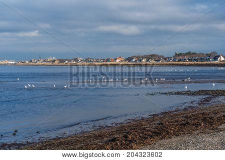 Seabirds sitting on the shoreline in Ayrshire.