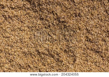 Mysore India - October 27 2013: In Ranganathapur closeup of a brown heap of rice chaff at an industrial rice miller. The husk is mechanically peeled from the rice kernel.