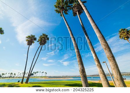 Palm trees in Mission bay San Diego. California USA