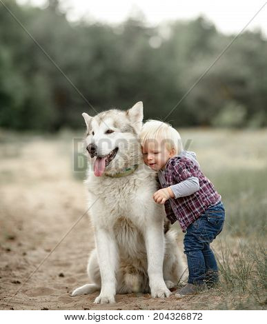 Little boy stands hugs sitting Malamute dog and cuddles him for walk along forest road.