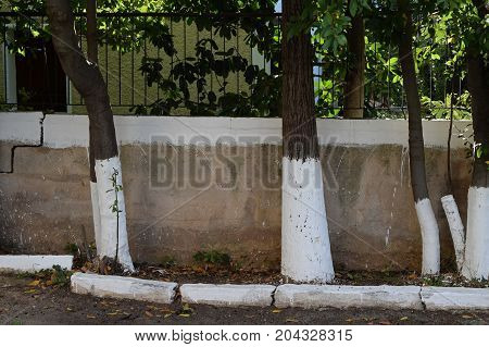 Whitewashed sidewalk garden tree trunks and fence painted white with limestone. Traditional narrow street in Athens Greece.