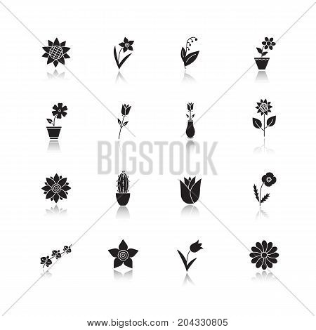Flowers drop shadow black glyph icons set. Garden, wild, house plants. Blooming decorative flowers. Isolated vector illustrations
