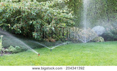 Irrigation of the garden with sprinkler system.