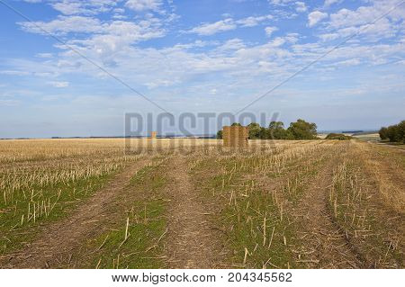 Harvested Oilseed Rape Field