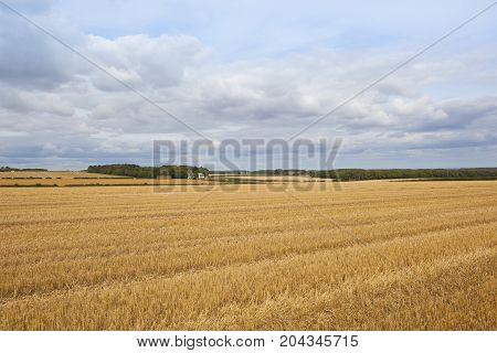 Wheat Stubble And Farm