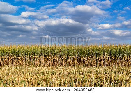 Enchanting Landscape On Threshed Corn Field And Cloudy Sky