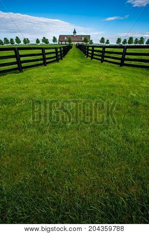 Bright Green Grass Of Horse Farm