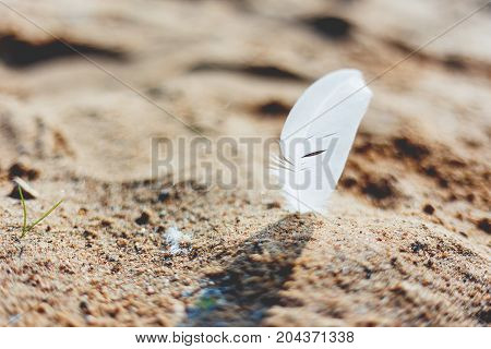 White feather of a seagull in sand. Symbol of lightness and fragility. Natural macro background.