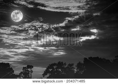 Sky With Clouds And Moon Above Silhouettes Of Trees. Serenity Nature Background.