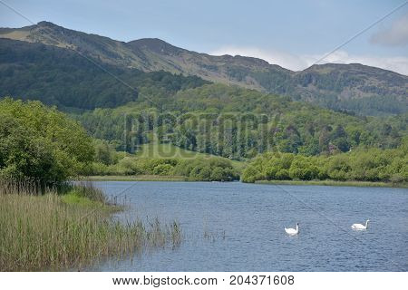 Lingmoor Fell and Elterwater, English Lake District